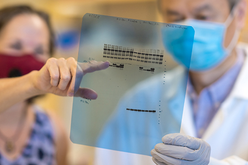 Healthcare workers review an testing sample on a transparency..